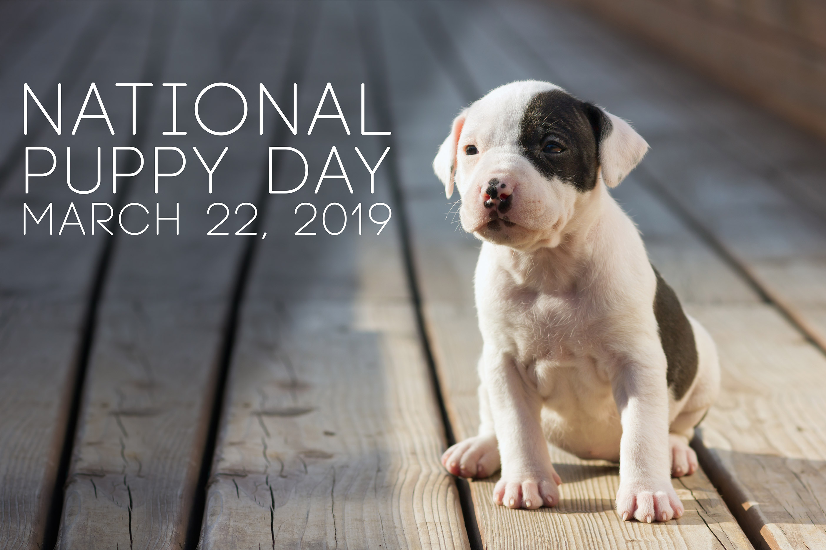 National Puppy Day March 22, 2019_
