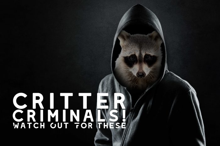 Watch Out For These Critter Criminals!