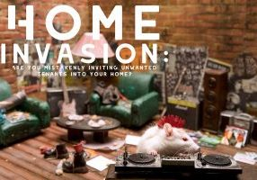 Home Invasion_ Are you mistakenly inviting unwanted tenants i