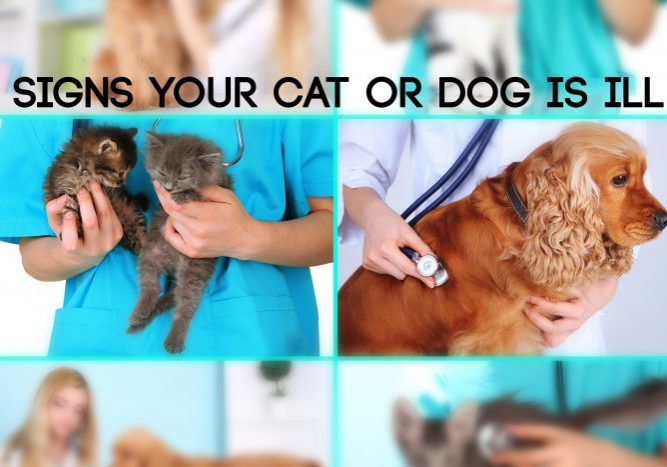 Signs Your Cat_Dog is Ill