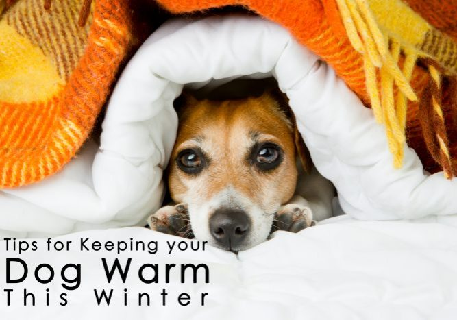 Tips for Keeping your Dog Warm This Winter copy